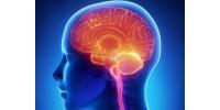 Работа на мозъка