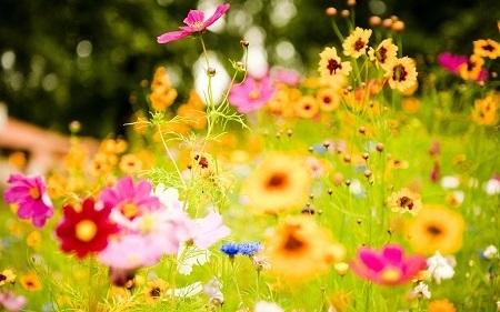 Цветове на природата и цветя